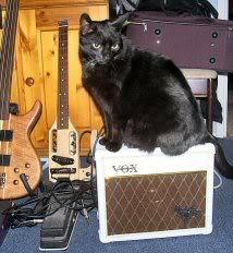 Black Kat Rock 'n' Roll Trivia!