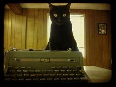 cat typewriter